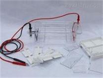 DYCP-31DN琼脂糖电泳仪(槽)