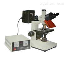 WSF100荧光显微镜
