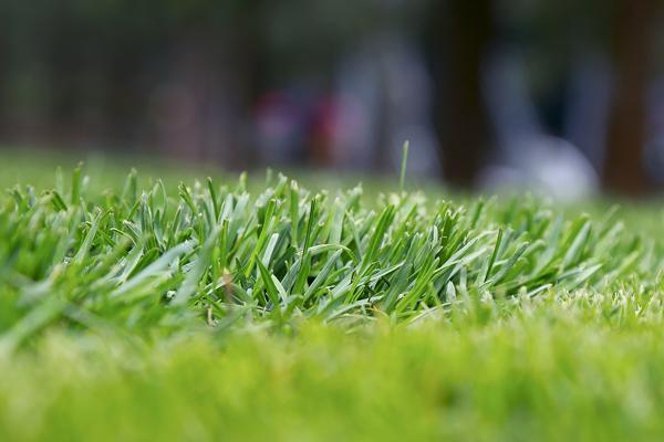 夏枯草喜迎丰收季,加工设备助益研究及生产